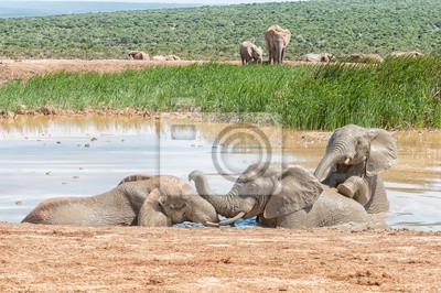 Drei Elefanten spielen in einem Wasserloch