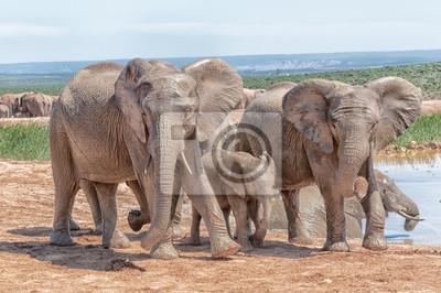 Drei junge Elefanten