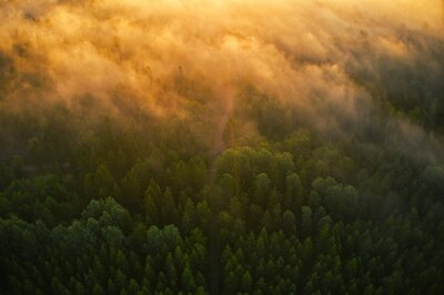 Poster Drone view of forrest during the sunset in Sweden . High quality photo