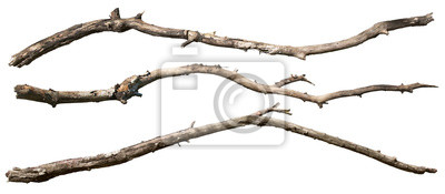 Poster Dry tree branch isolated on white background. Broken branches