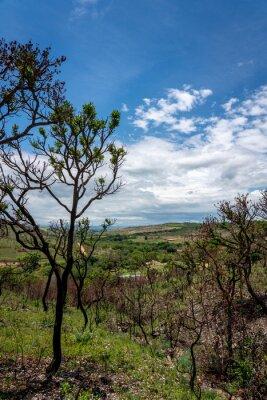 Dry vegetation in Minas Gerais state in Brazil