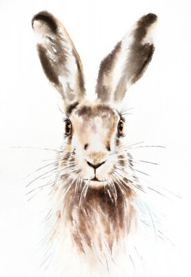 Poster Easter bunnies watercolor illustration, rabbit portrait isolated