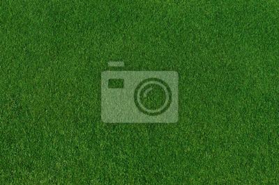 Poster Echte grüne Gras Hintergrund