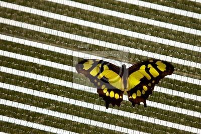 Ein Malachit Schmetterling auf einem abstrakten Hintergrund