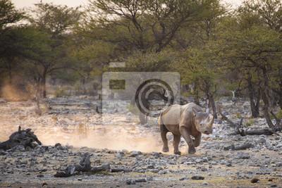 Ein schwarzes Nashorn im Etosha Nationalpark.