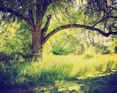 Poster ein Wald oder Park mit Bäumen mit Herbstlaub mit einem retr getan