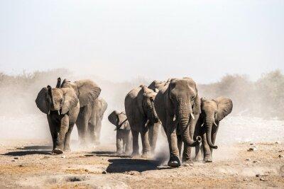 Poster Eine Herde von Elefanten nähert sich einem Wasserloch im Etosha Nationalpark. Northrtn Namibia, Afrika.