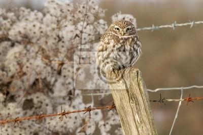 Eine kleine Eule auf einem Zaun Post im Winter thront
