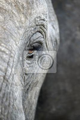 Eine Nahaufnahme von einem Elefanten Auge