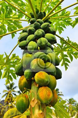 Eine Papaya Baum