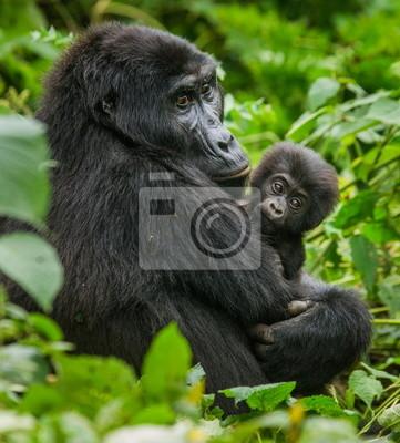 Eine weibliche Berggorilla mit Baby