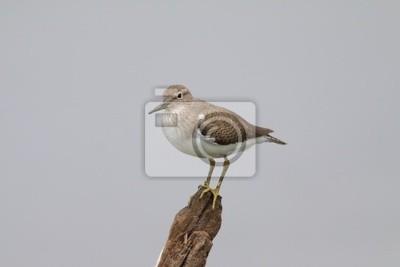 Einsamer Vogel