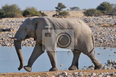 Elefant, 2