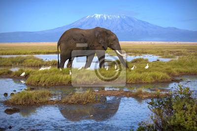 Elefant am Pool auf dem Hintergrund der Kilimanjaro