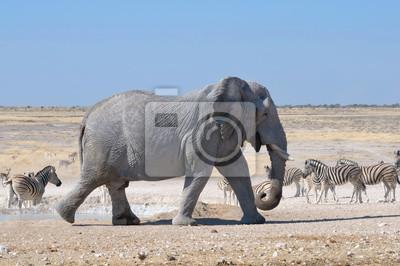 Elefant, Etosha National Park, Namibia