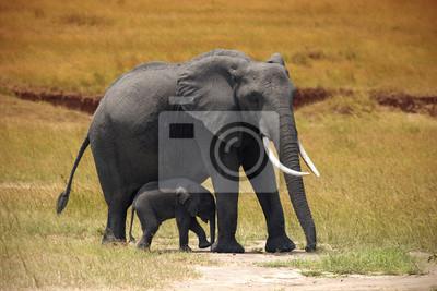 Elefant mit einem kleinen Baby in Amboseli