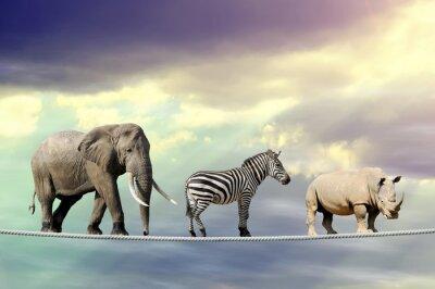 Poster Elefant, Zebra, Nashorn zu Fuß auf einem Seil