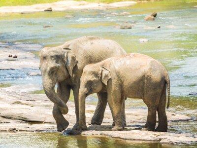 Poster Elefanten