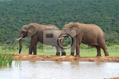 Elefanten, Addo Elephant National Park, Südafrika