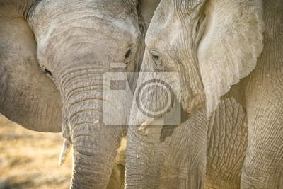 Elefanten an einem Wasserloch