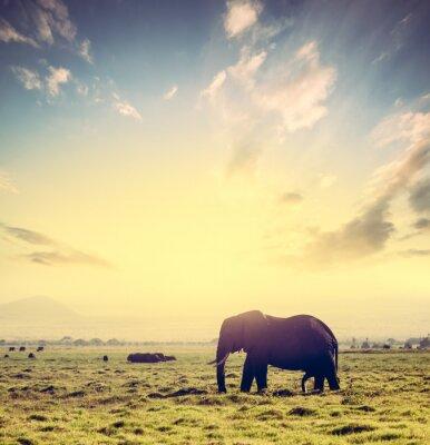 Poster Elefanten auf afrikanischen Savanne bei Sonnenuntergang. Safari in Amboseli, Kenia, Afrika