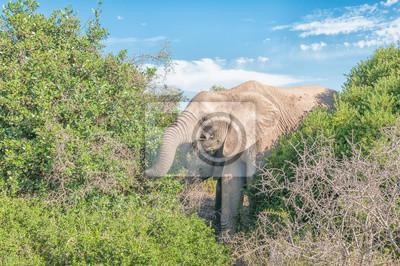 Elefanten, die auf Sträuchern