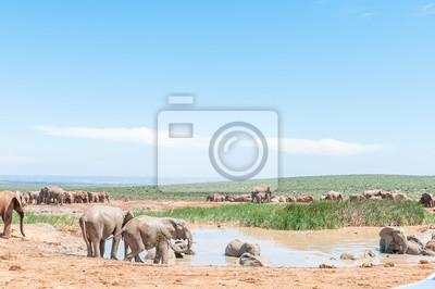 Elefanten, die ein Schlammbad nehmen