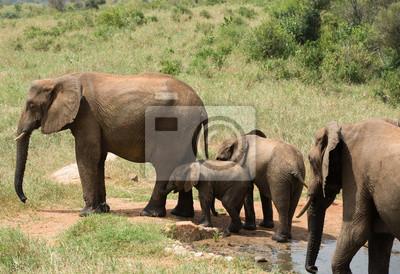 Elefanten Familie in der Nähe Wasserloch in Kenia