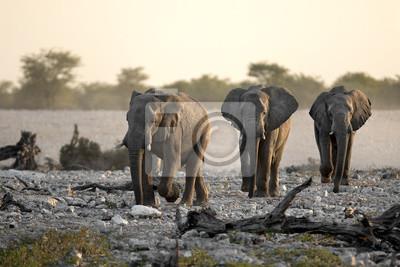 Elefanten gehen in einer Reihe.