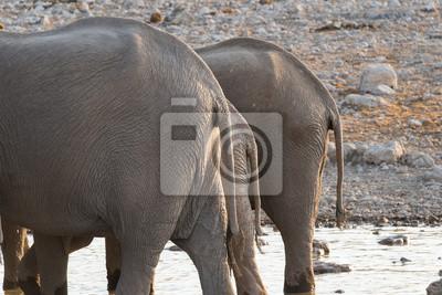 Elefanten Hintern
