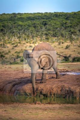 Elefanten im Addo Nationalpark in Südafrika