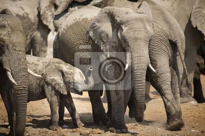Elefanten im Etosha Nationalpark.