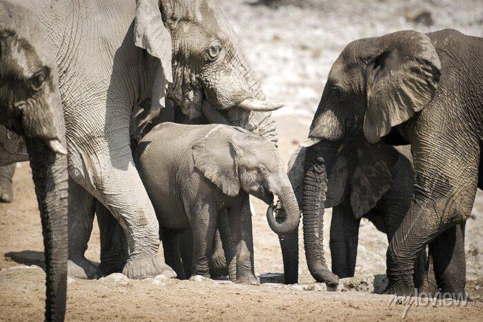 Poster Elefanten im Etosha Nationalpark.