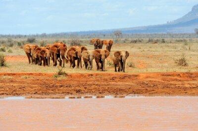 Poster Elefanten im Nationalpark von Kenia