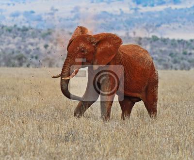 Elefanten im Tsavo Park