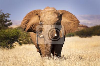 Poster Elefanten in der Savanne, in Namibia, Afrika, Konzept für die Reise in Afrika und Safari