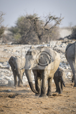 Elefanten in Okaukuejo Wasserloch.