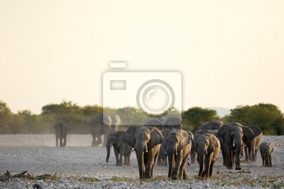 Elefanten kommen in ein Wasserloch.