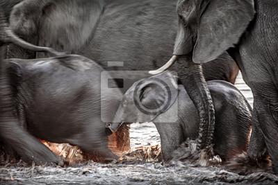 Elefanten laufen durch Wasser