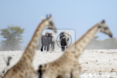 Elefanten marschieren auf ein Wasserloch.