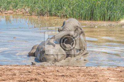 Elefanten spielen in einem waterhole