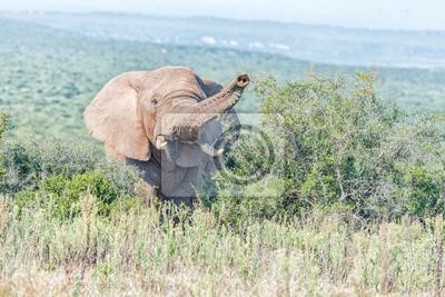 Elefanten suchen in Richtung Kamera