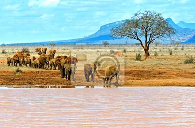 Elefanten Tsavo East