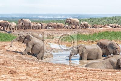 Elefanten versuchen, aus dem Wasserloch