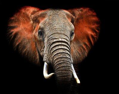 Elefanten von Tsavo