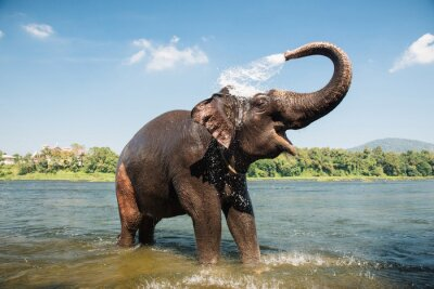 Poster Elefanten waschen in den Fluss