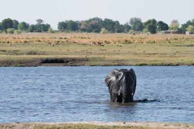 Elefanten Wasser Kreuzung