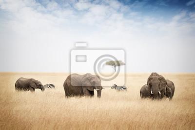 Poster Elefanten weiden in Kenia Afrika