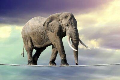 Poster Elefanten zu Fuß auf einem Seil