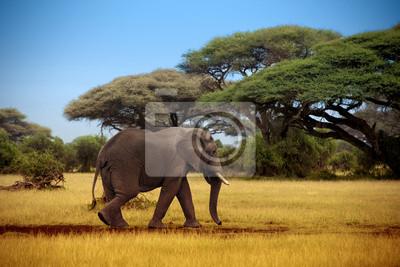 Elefanten zu Fuß durch die Savanne in Masai Mara